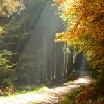Светлый путь