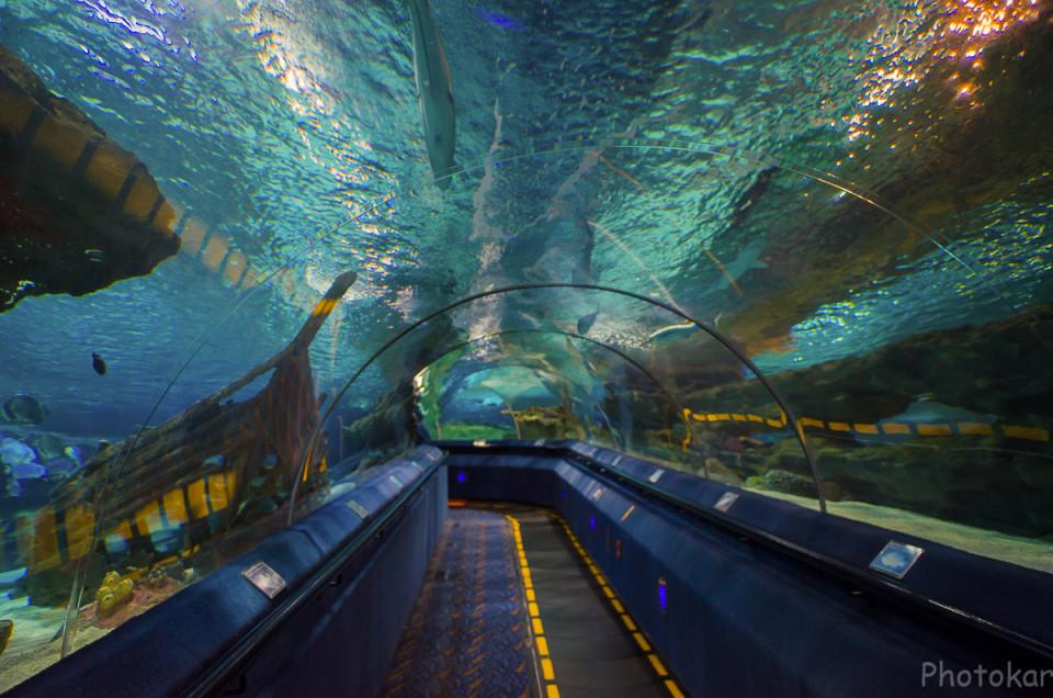 Океанариум. Морской туннель. Длиной около 200 м.