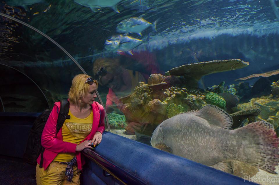 Океанариум. Встреча с морской рыбой.
