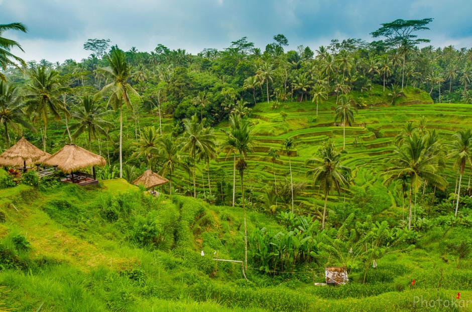 Рисовые домики