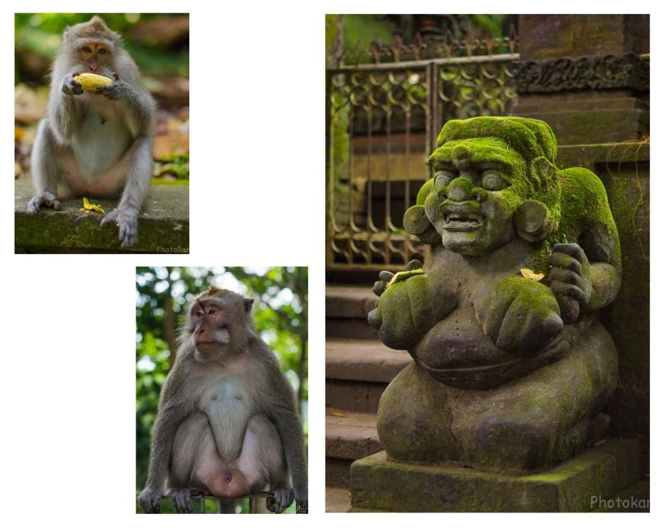 "Администрация ""планеты обезьян"""