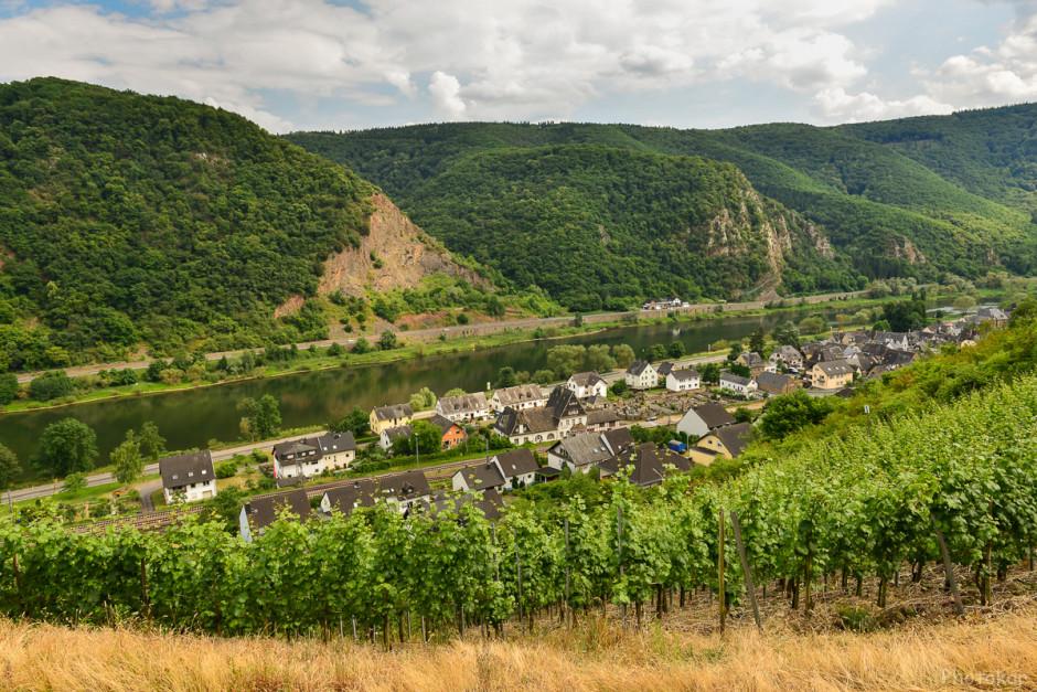 Долина реки Мозель. Виноградники.